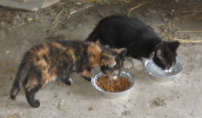 Kittens_Black