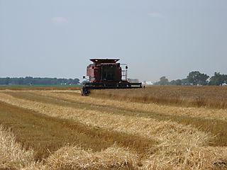 Wheat_2008 005
