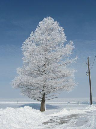 Winter_Scenes 010